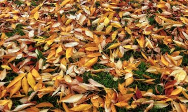 Autumn leaves. Grass Cutting in Clacton